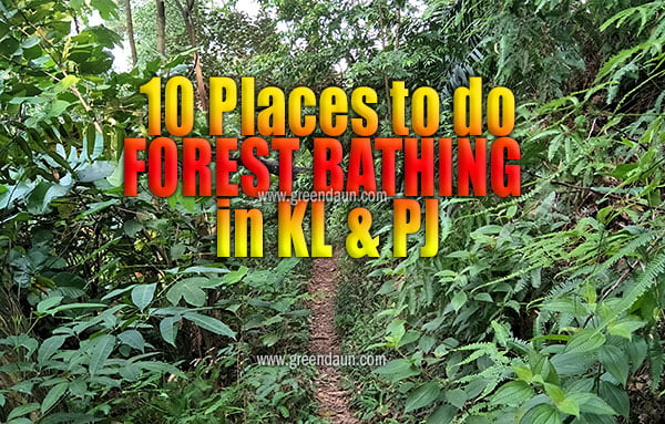 10 Places to do Forest Bathing in PJ and KL